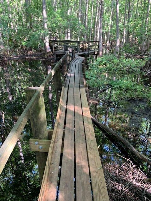 Boardwalk trail in Highland Hammock State Park