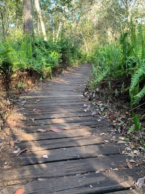 Hiking trail in Little Manatee River State Park
