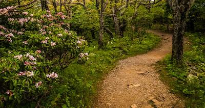 Dirt hiking trail in Shenandoah National Park